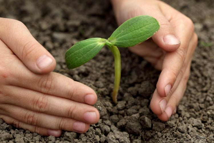 Биостимуляторы растений