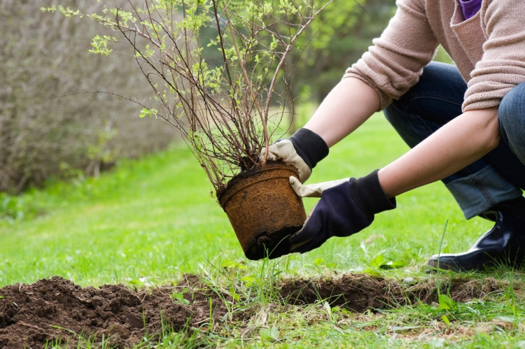 Making planting strip